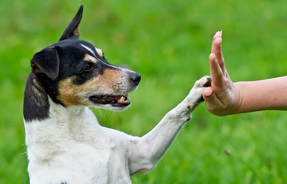 Try These Ideas To Make Dog Training Less Work And More Reward